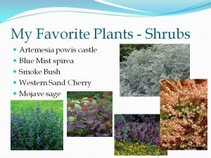 My favorite shrubs