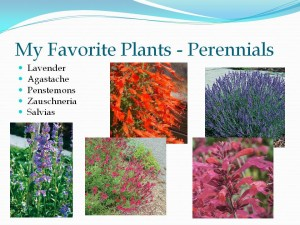 My favorite perennials