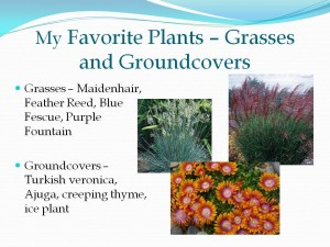 My favorite grasses and groundcovers